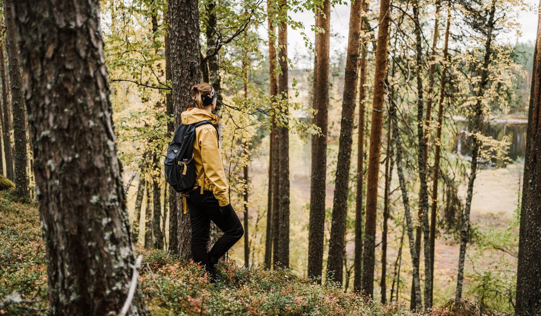 Metsä rauhoittaa kulkijan mielen