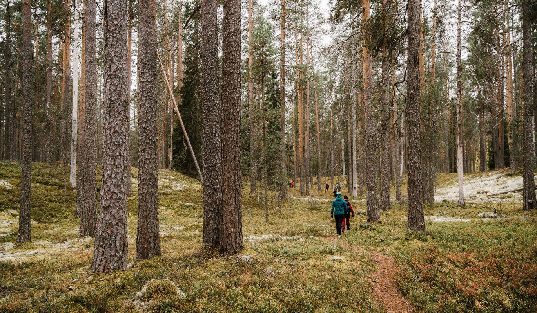 Vaeltajia Petkeljärven kansallispuistossa